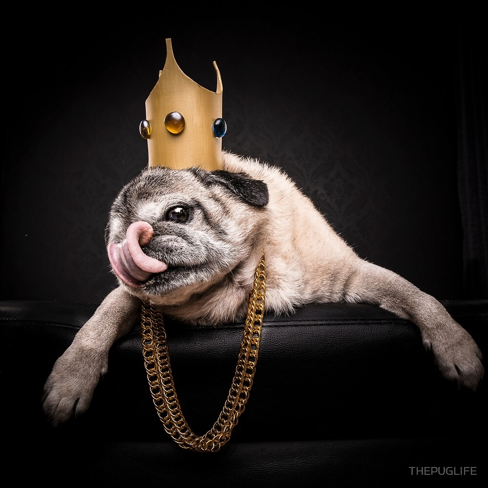 The Pug Life - Notorious P.U.G by THEPUGLIFE