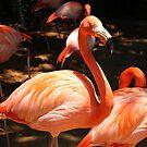 Flamingo by Vivian Sturdivant