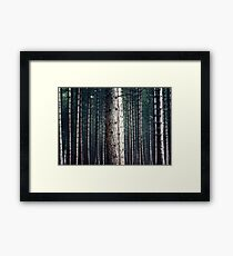 Patterns in Nature Framed Print