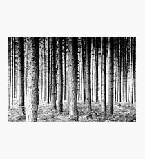 Pine Forest Photographic Print