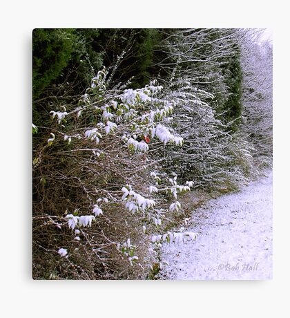 """""""Bushy White""""... prints and products Canvas Print"""