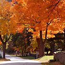 Bright Maple Morning by WildThingPhotos