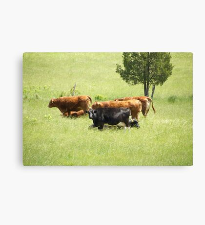 Cowgirls Canvas Print
