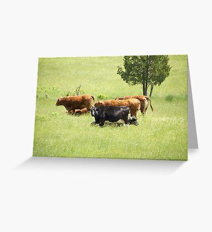 Cowgirls Greeting Card