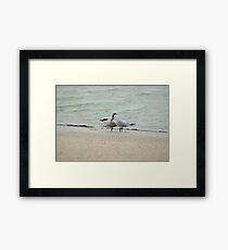 Singing Terns Framed Print