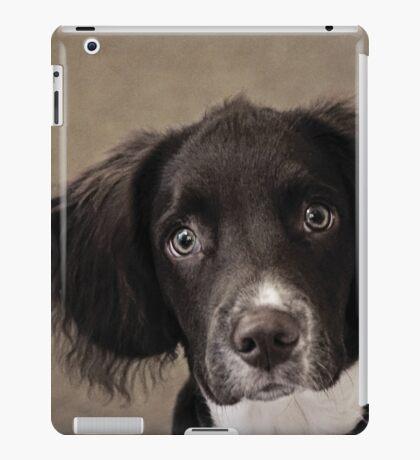 Springer Spaniel iPad Case/Skin