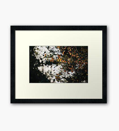 Last days of Autumn Framed Print