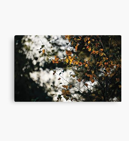 Last days of Autumn Canvas Print