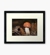 Red Cap Mushroom Framed Print