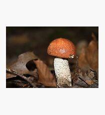 Red Cap Mushroom Photographic Print
