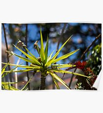 Spike Plant - Nature Photography  Poster