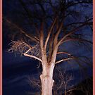 Haunted Tree by WildThingPhotos