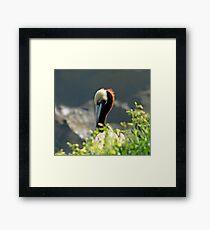 Bird bill Framed Print
