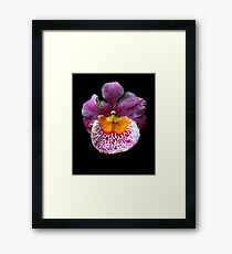 Unique Orchid  Framed Print