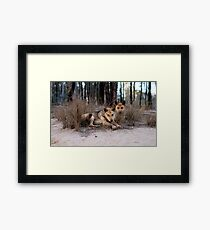 Watchful Dingoes Framed Print
