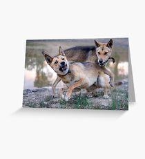 Playful Dingoes Greeting Card