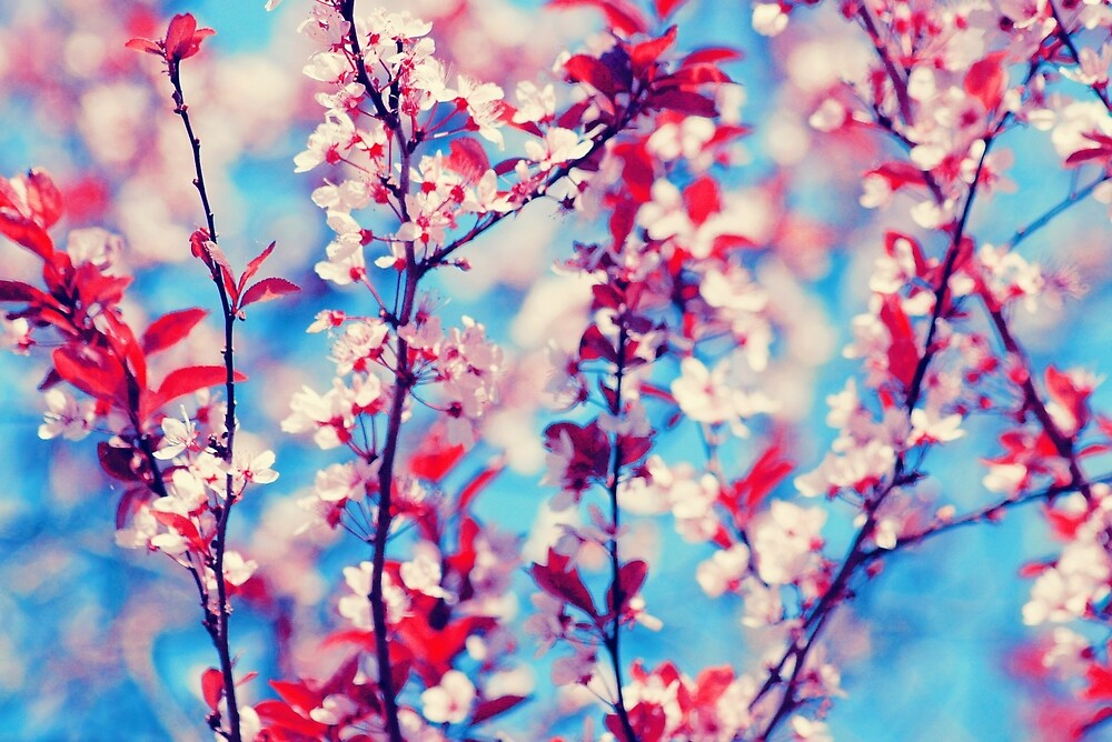 Blooming by LenkaOBS