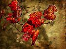 Autumn Leaves by Elaine Teague
