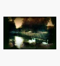 Swans on a river circa 1910 Photographic Print