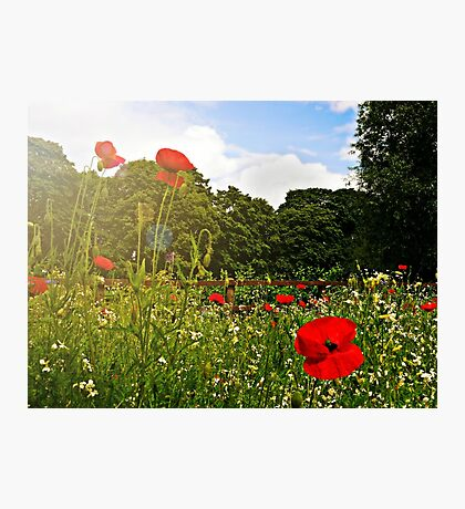 Sun kissed poppies Photographic Print