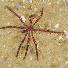 Sea Spider by Andrew Trevor-Jones