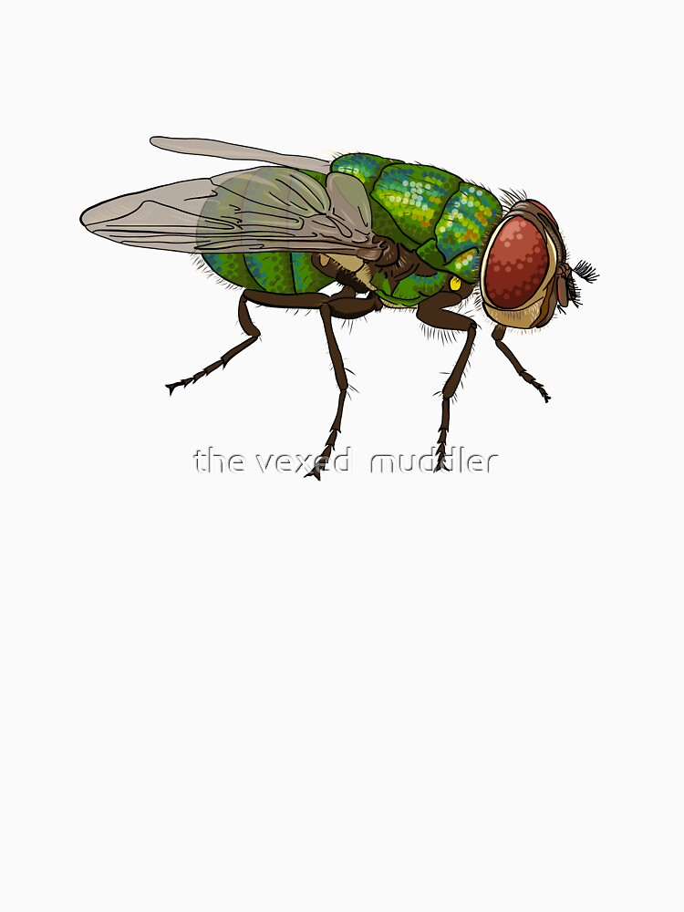 Chrysomya megacephala blowfly by thevexedmuddler