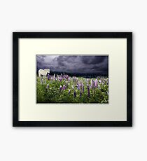 A Childs Dream Among Lupine Framed Print