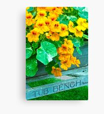 Tubbed Nasturtiums On Bench Canvas Print