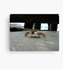 Crab is not amused Canvas Print