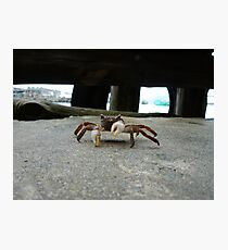 Crab is not amused Photographic Print