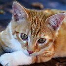 kitten by Ianua