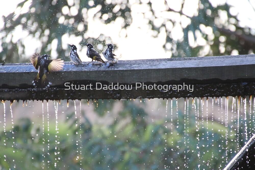 Bathing Birds by Stuart Daddow Photography