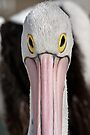 The Pelican Stare by Werner Padarin