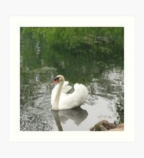 Barton Swan Art Print