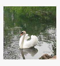 Barton Swan Photographic Print