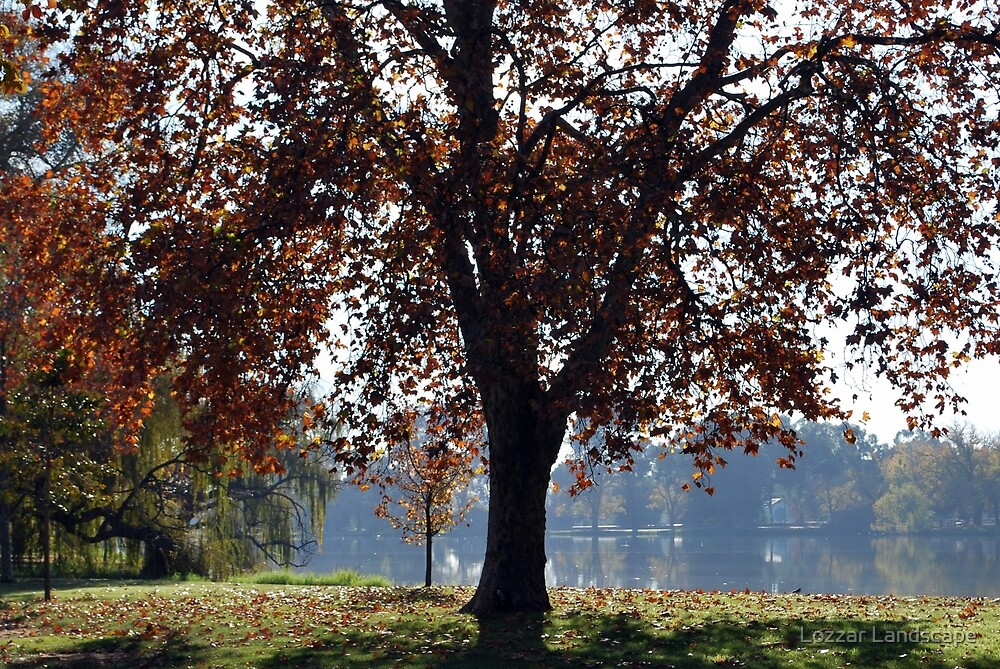 Autumn Tree Lake Weeroona by Lozzar Landscape