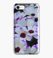 Toowoomba Carnival of Flowers- daisies iPhone Case/Skin