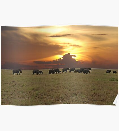 Going Home - A Serengeti Sunset, Tanzania Poster