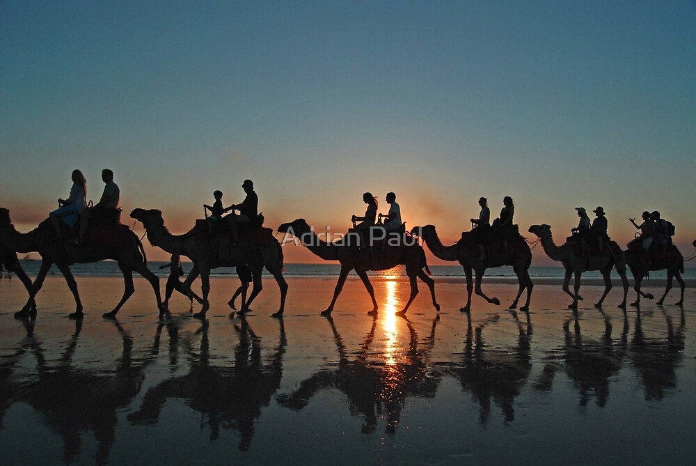Camels at Sunset, Cable Beach, Broome, Western Australia by Adrian Paul