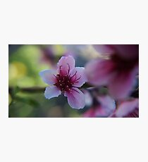 Blossom - Macro Mk II Photographic Print