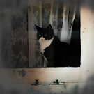 Cat in the Window by VictoriaHerrera