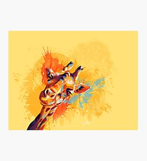 Hello - Giraffe portrait Photographic Print