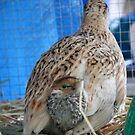 Motherly Instincts by Lyrebird