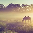 Misty Morning on the Dutch Field by JennyRainbow