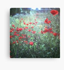 Red wild poppy flowers on green Hasselblad square medium format film analogue photograph Canvas Print