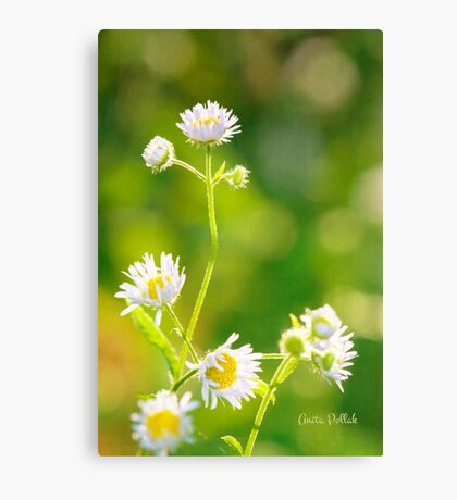 Celebrating the Joy of Summer Canvas Print