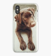 Chocolate young labrador dog iPhone Case