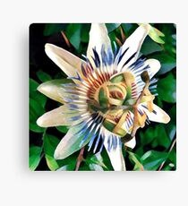 passionfruit blossoms Canvas Print