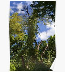 Green Trees and Blue Sky Poster