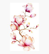 Pink Watercolor Magnolia Illustration Photographic Print